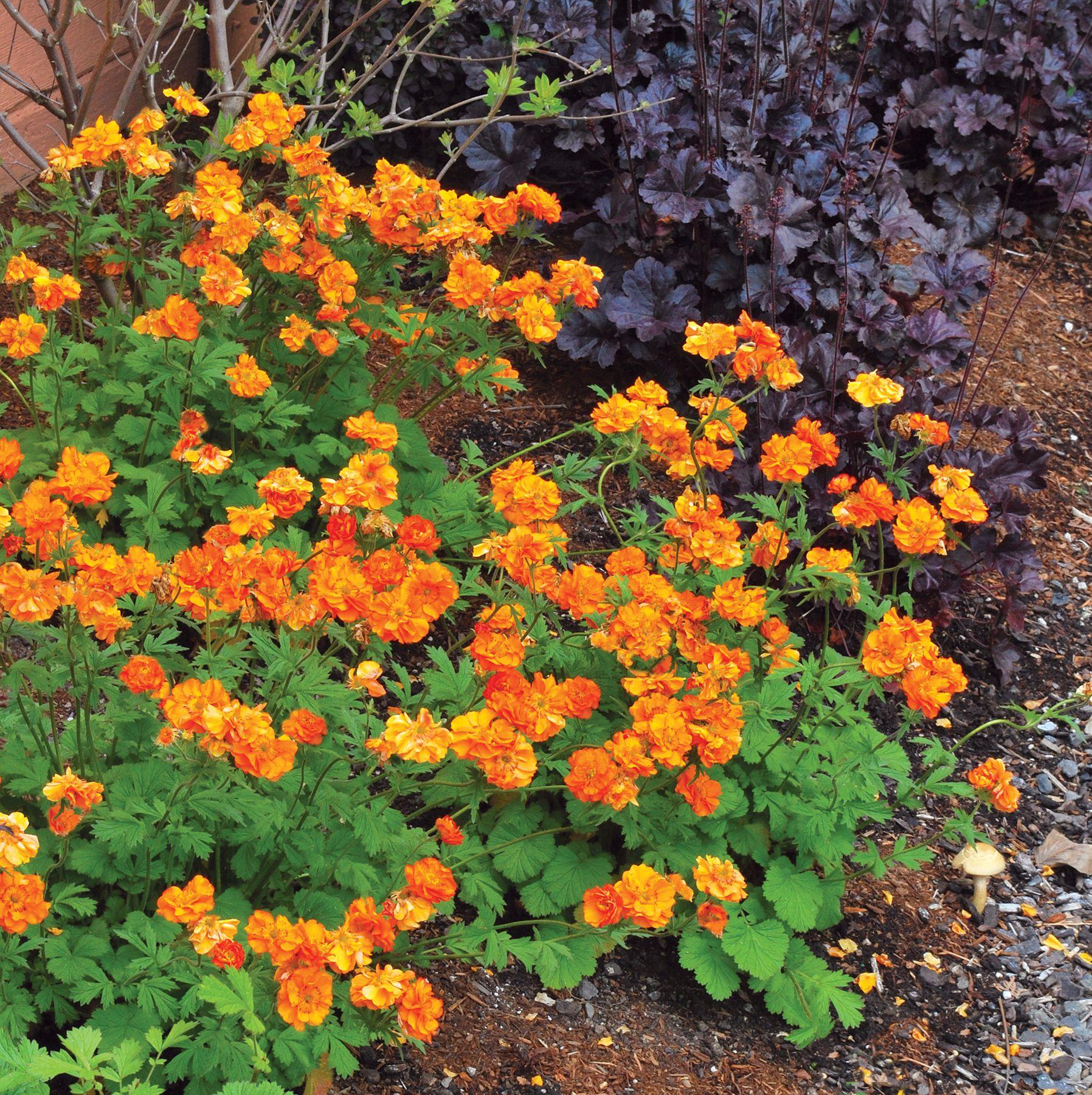 Осенние цветы многолетники в саду фото